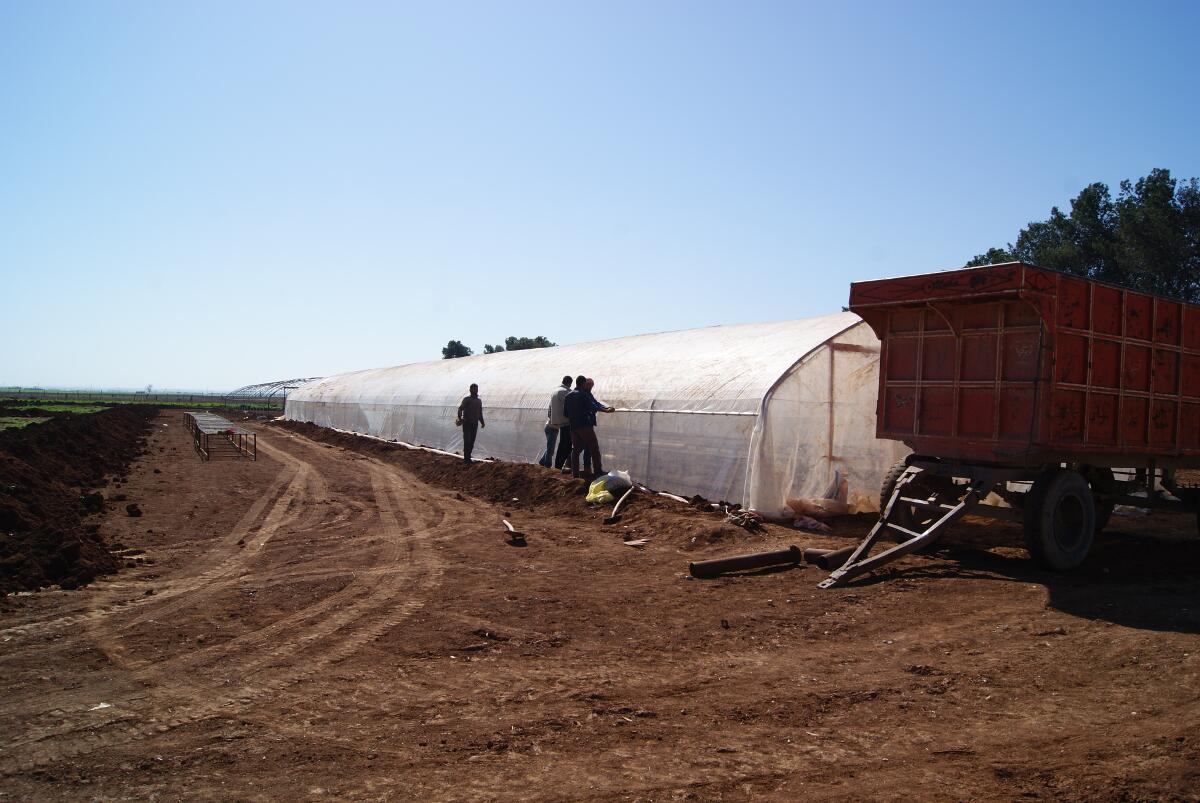 One of a few greenhouses already in operation