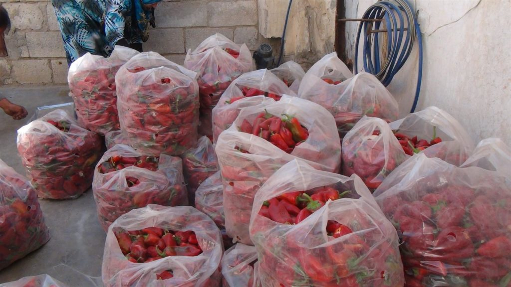 Kurdistan, Rojava, Syria, Cizire, co-operatives, cooperatives, co-operative, cooperative, co-op, co-ops, solidarity, solidarity economy, workers co-op, workers co-operative, workers cooperative, cooperative economy, women, empowerment, Hasakah, Hesekê, peppers