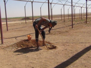 Kurdistan, Rojava, Syria, Cizire, co-operatives, cooperatives, co-operative, cooperative, co-op, co-ops, solidarity, solidarity economy, cooperative economy, agriculture, dirbesiye, Tel Temir, livestock