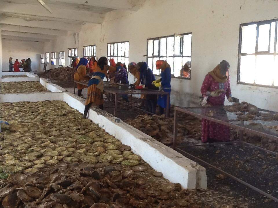 women, cooperative, coops, Rojava, Syria, feminism, jineology, Syria, Kurdistan, workers co-op, workers co-operative, workers cooperative, cooperative economy, agriculture