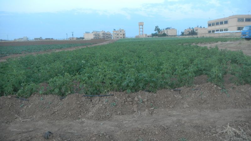 Rojava, Syria, Kurdistan, agriculture, cooperatives, coops, farming, economy