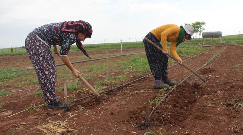 Diyarbakir, Amed, Kurdistan, Turkey, Bakur, cooperative, commune, women, jineologi, jineology