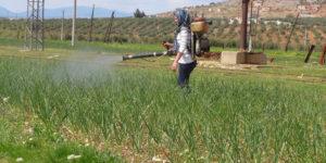 Rojava, Syria, women, Kurdistan