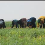 Rojava, Syria, Kurdistan, cooperative, coops, women, jineologi, jineology