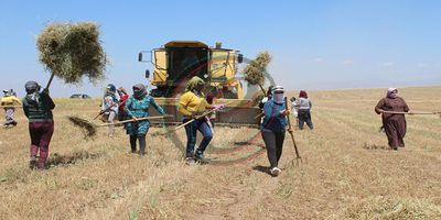 Rojava, Syria, Kurdistan, economy, cooperatives, coops