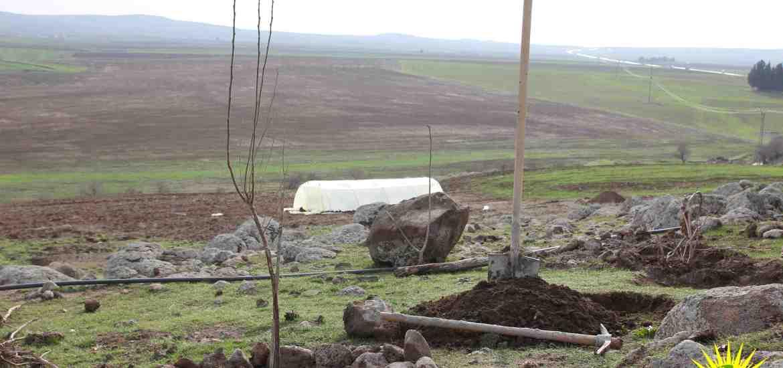 Rojava, Internationalist Commune, Rojava, Kurdistan, Syria, Make Rojava Green Again, reforestation, ecology