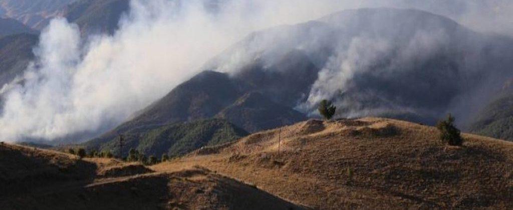 Kurdistan, Bakur, Turkey, ecology, fire, forest fire